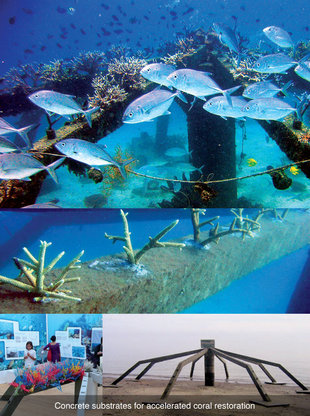 D9_concrete_substrates_for_accelerated_coral_restoration.gallery